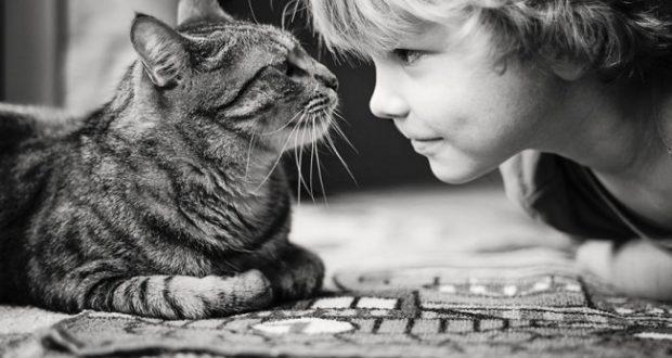 Νόσος εξ' ονύχων γαλής (Cat-scratch disease): Όλα όσα πρέπει να ξέρεις